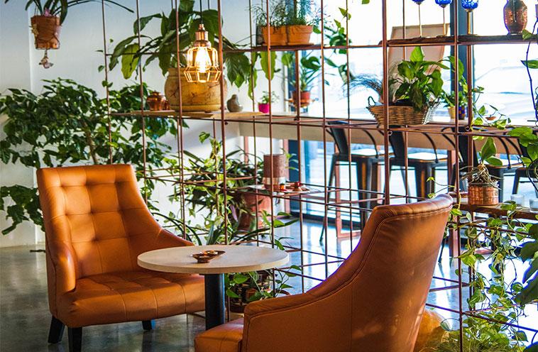 Indlæg billede Hvordan man skal behandle 4 indendørs planter der virkelig kan supplere dit boligindretning Venus hair fern - Hvordan man skal behandle 4 indendørs planter, der virkelig kan supplere dit boligindretning