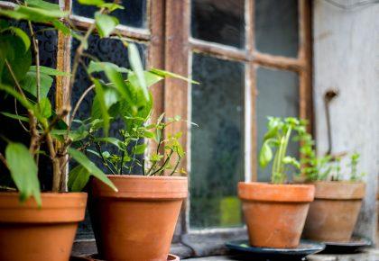 okt2 420x290 - Skab rum i haven smukke terracotta krukker