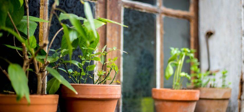 okt2 840x385 - Skab rum i haven smukke terracotta krukker
