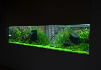 jumpstory download20200527 074223 420x290 - Nyd dit akvarie med den rette belysning