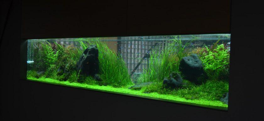 jumpstory download20200527 074223 840x385 - Nyd dit akvarie med den rette belysning